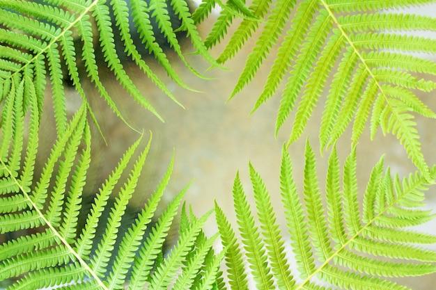 De belles fougères laissent un feuillage vert.