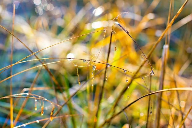 De belles gouttes d'eau sur une herbe