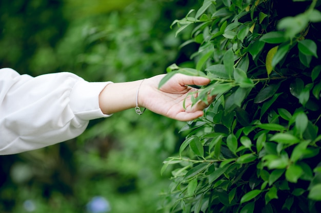 Belles mains et feuilles vertes des amoureux de la nature,