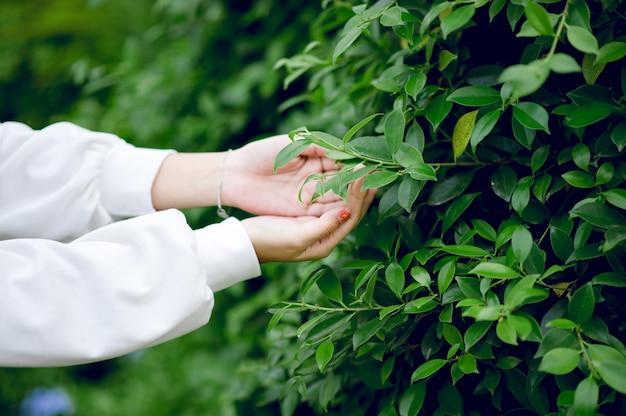 Belles mains vertes et feuilles