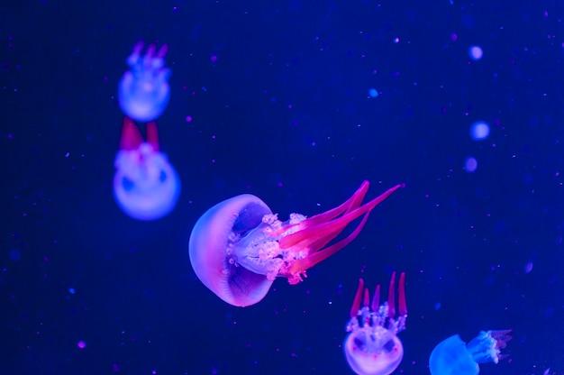 Belles méduses se bouchent. fond abstrait.
