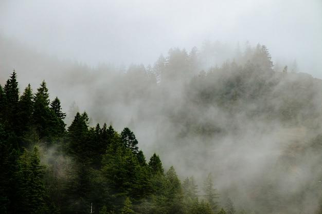 Belles montagnes boisées dans un brouillard