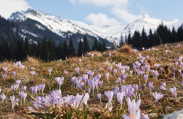 Belles montagnes en moravie. vue au sol de fleurs épanouies.