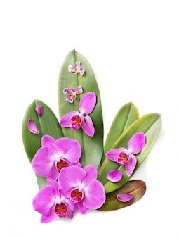 Belles orchidées isolées sur fond blanc