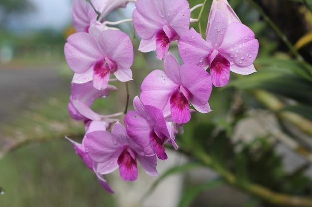Belles orchidées violettes
