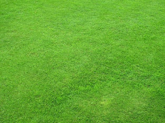 De belles pelouses vertes parfaitement coupées pour le fond