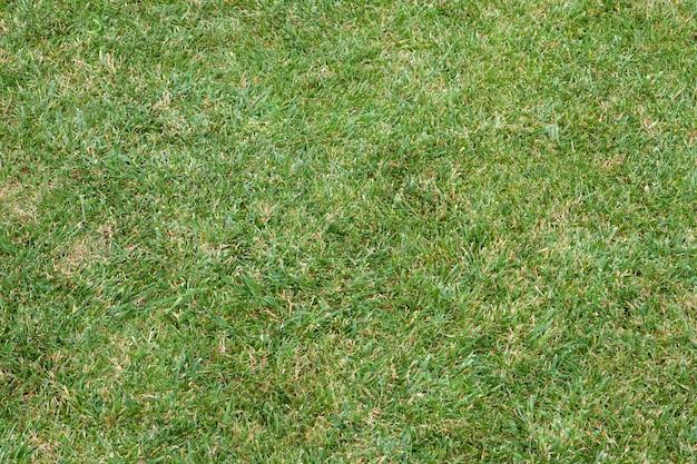 De belles pelouses vertes pour le fond