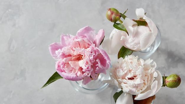 Belles pivoines douces avec des bourgeons dans des vases en verre sur fond de béton gris avec une copie de l'espace. la carte postale de la fête des mères. vue de dessus