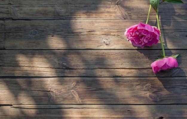 Belles pivoines sur fond de bois sombre ancien au soleil