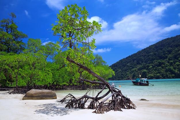 Belles plages et mangroves de mer tropicale.