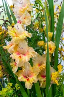 Belles plantes et fleurs décoratives. fond naturel.
