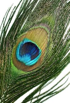 Belles plumes de paon sur fond blanc