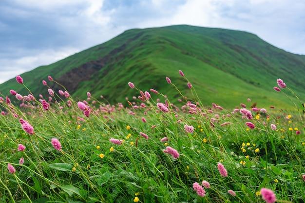 Belles prairies alpines fleuries vertes sur la corniche bzerpinsky à krasnaya polyana, sotchi. montagnes et ciel avec des nuages