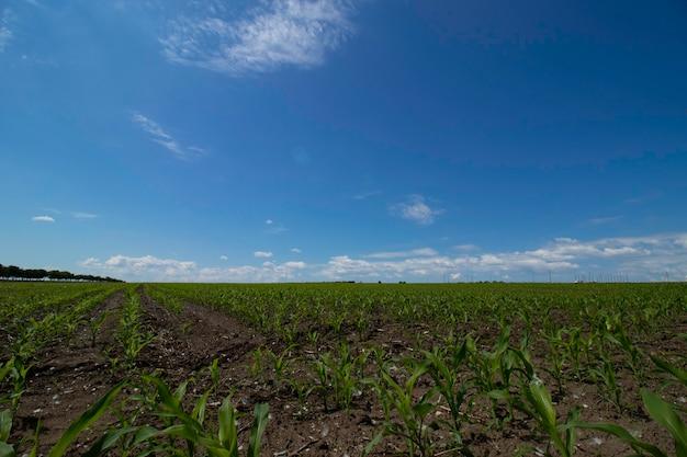 Belles Prairies Vertes Sous Un Ciel Nuageux Au Début De L'été Photo Premium