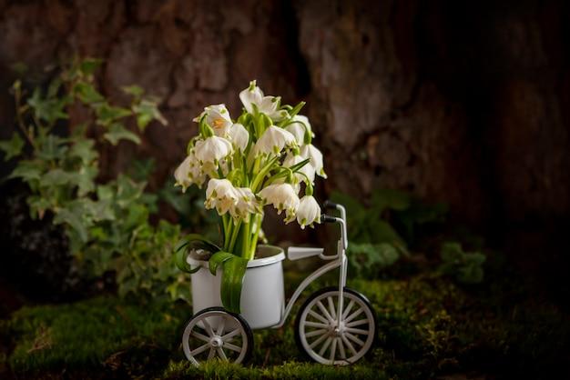 Belles premières fleurs de perce-neige au printemps dans le panier de vélo jouet dans la mousse dans la forêt près de l'arbre