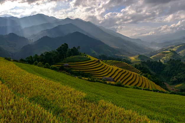 Belles rizières en terrasses, à mu cang chai, yenbai, vietnam.
