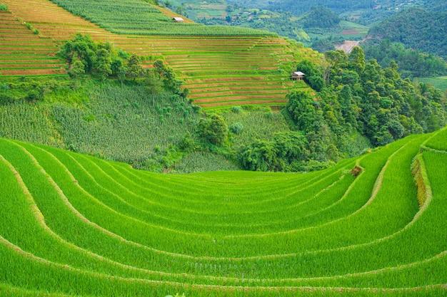 Belles rizières en terrasses