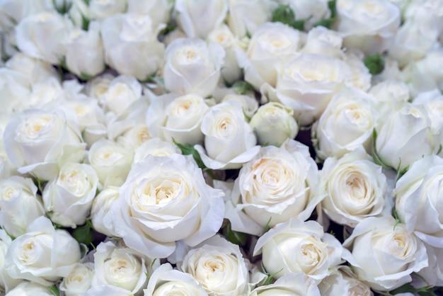 Belles roses blanches pour mariage et fiançailles.