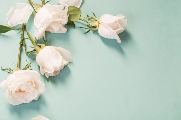 Belles roses sur fond de papier vert
