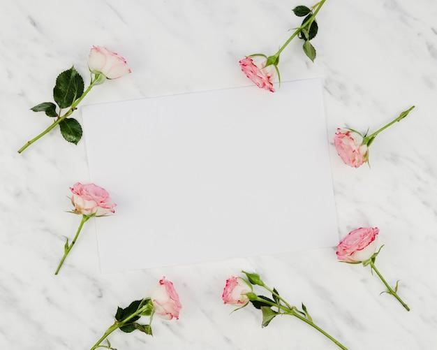 Belles roses fraîches avec espace copie