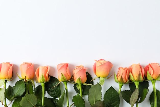 Belles roses fraîches avec fond, vue de dessus