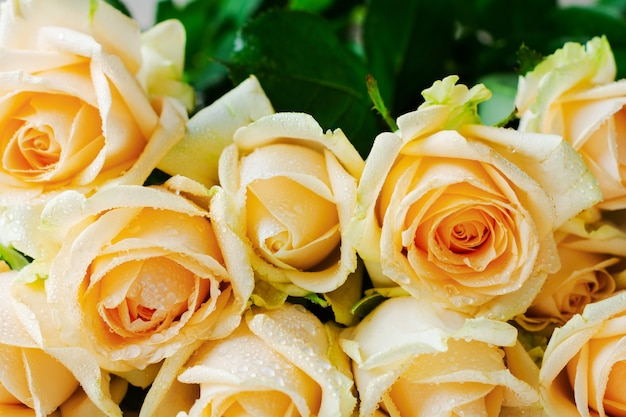 Belles roses orange sur un béton léger