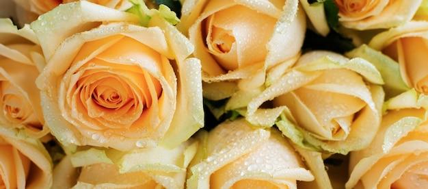 Belles roses orange sur un fond de béton clair. composition horizontale