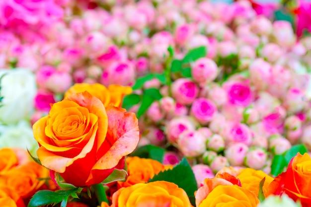 Belles roses oranges. fond naturel festif floral.