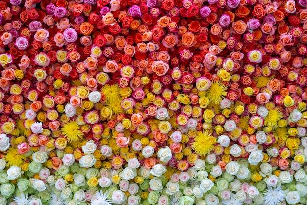 De belles roses pour le mariage et les fiançailles.