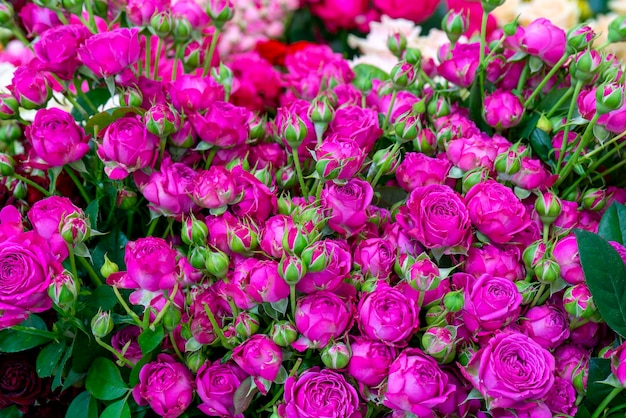 Belles roses roses. fond naturel festif floral.