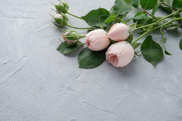 Belles roses roses touffues en forme de pivoine. saint valentin, le concept d'amour et de fidélité. copiez l'espace.