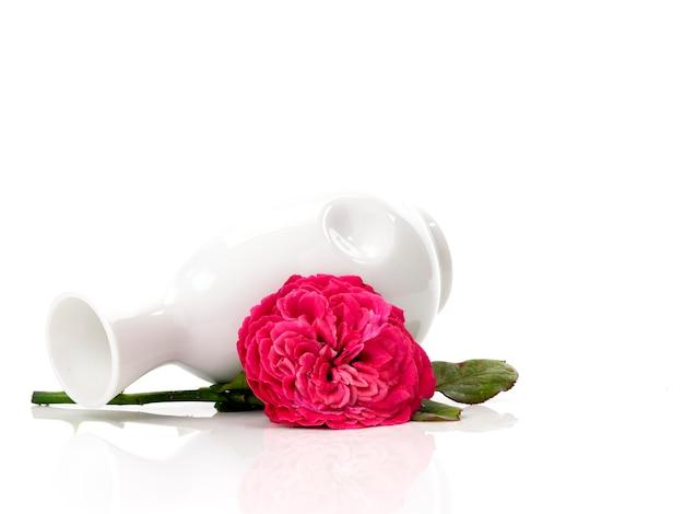 Belles roses rouges dans un vase blanc sur blanc