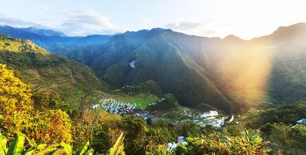 Belles terrasses de riz vert aux philippines. culture du riz dans l'île de luçon.
