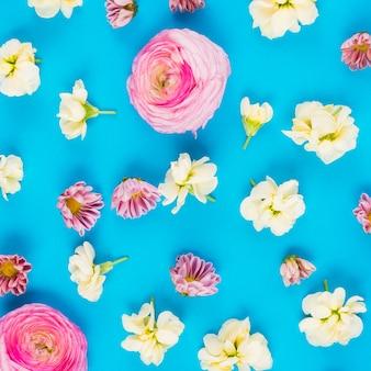 Belles têtes de fleurs colorées