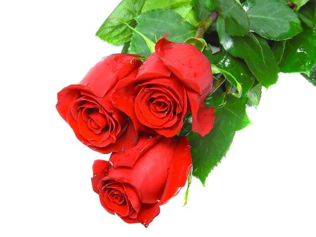 Belles trois roses roses isolées sur fond blanc.