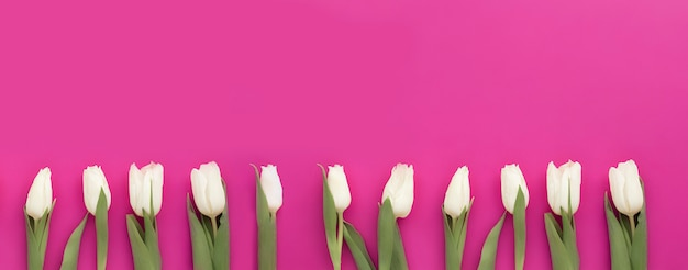 Belles tulipes blanches sur fond rose