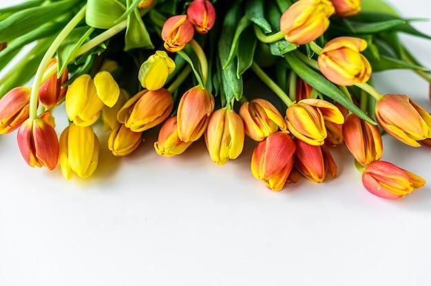 Belles tulipes colorées