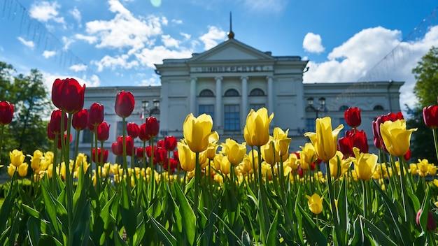 Belles tulipes sur fond universitaire. université d'état de tomsk. russie.