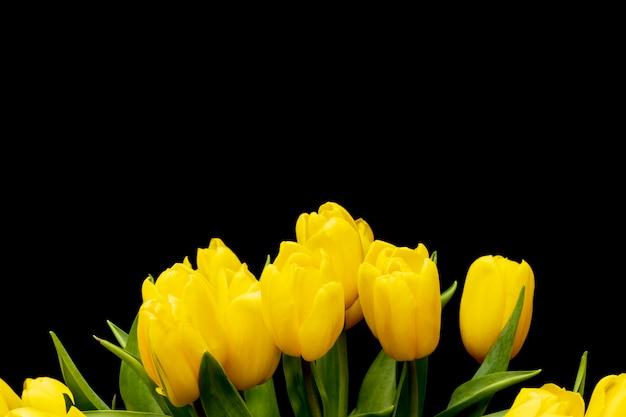 Belles tulipes jaunes fraîches sur fond noir. photo de haute qualité