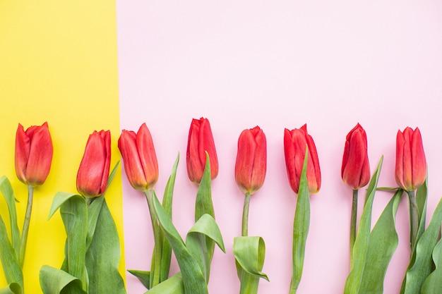 Belles tulipes rouges sur fond de papier multicolore avec espace de copie. printemps, été, fleurs, concept de couleur, journée de la femme