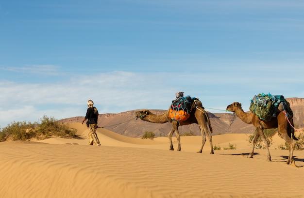 Bereber mène des chameaux dans le désert, maroc