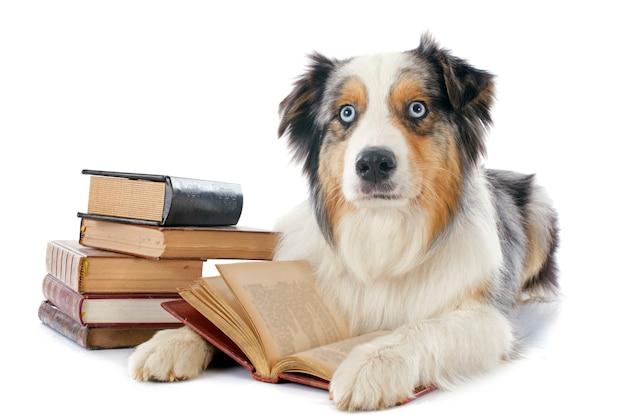 Berger australien et livres