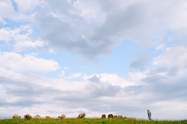 Berger et troupeau de moutons paissent épiquement contre le ciel bleu avec des nuages