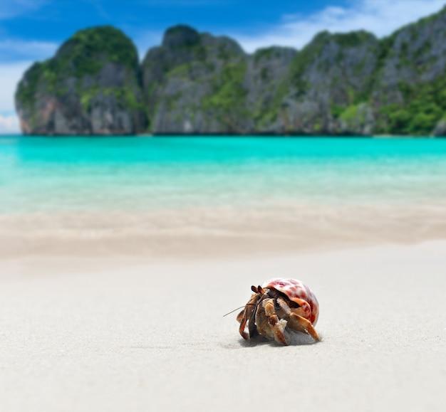 Bernard-l'ermite marchant sur la plage