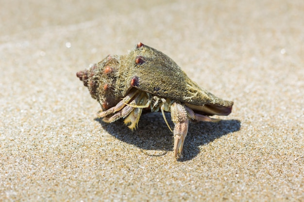 Bernard-l'ermite sur la plage de hua hin
