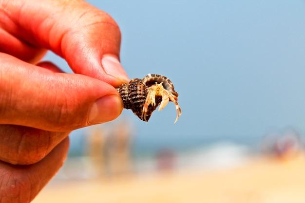 Bernard-l'ermite, vie sous-marine de l'océan indien