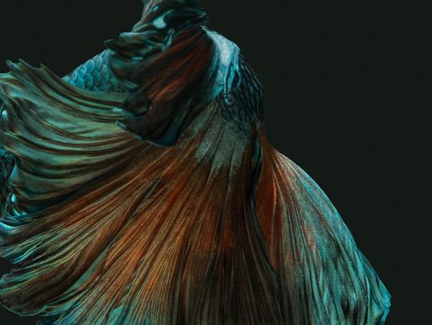 Betta poisson de combat siamois, queue de demi-lune brillante métallique de cuivre vert métallique brillant