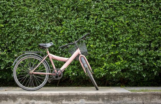 Bicyclette sur fond de mur de feuilles