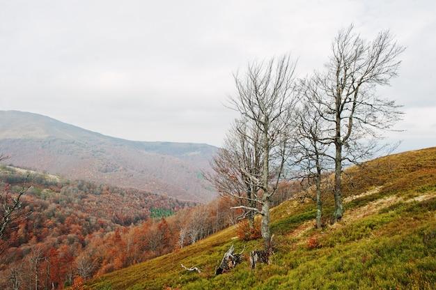 Bière arbres nus sur les montagnes en automne, à carpates, en ukraine, en europe.