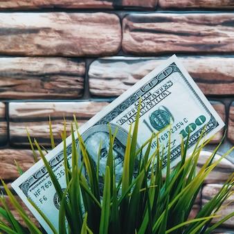 Un billet de cent dollars dans l'herbe. gros plan, contre un mur de briques de couleur brun rouge foncé.